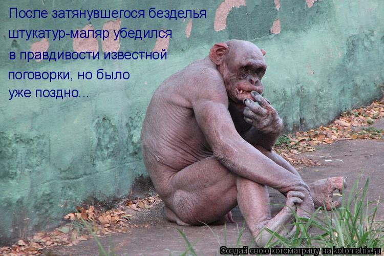 Котоматрица: После затянувшегося безделья  в правдивости известной штукатур-маляр убедился поговорки, но было уже поздно...