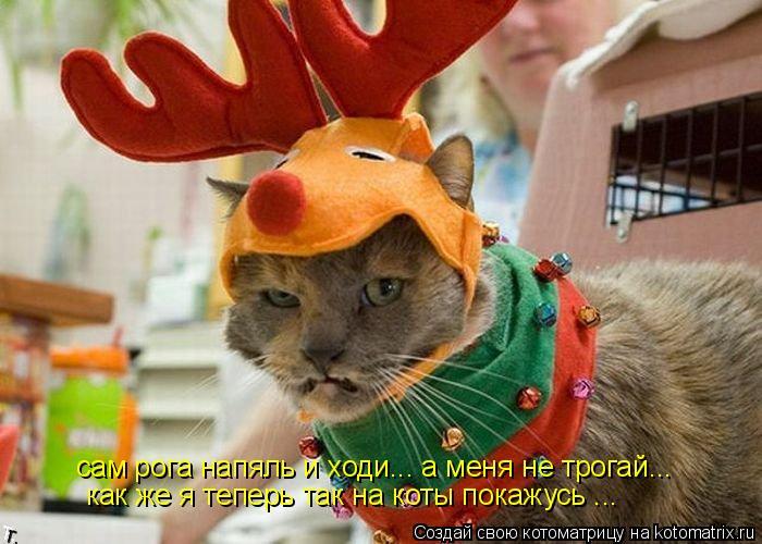 Котоматрица: сам рога напяль и ходи... а меня не трогай...  как же я теперь так на коты покажусь ...