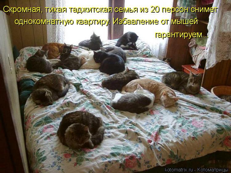 Котоматрица: Скромная, тихая таджитская семья из 20 персон снимет  однокомнатную квартиру. Избавление от мышей  гарантируем...