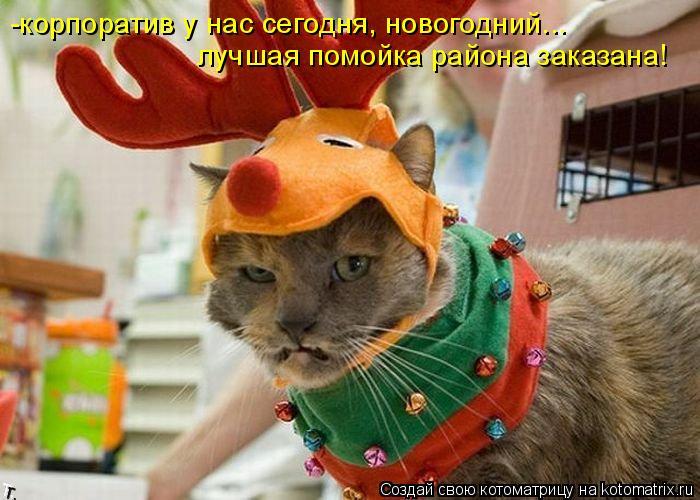 Котоматрица: -корпоратив у нас сегодня, новогодний... лучшая помойка района заказана!