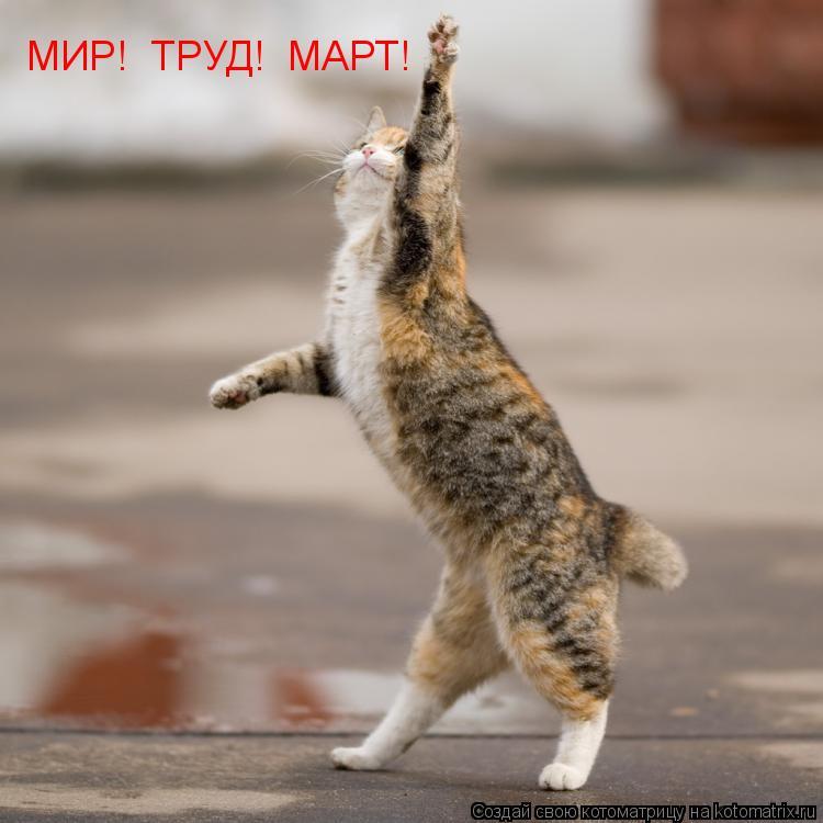 Котоматрица: МИР!  ТРУД!  МАРТ!