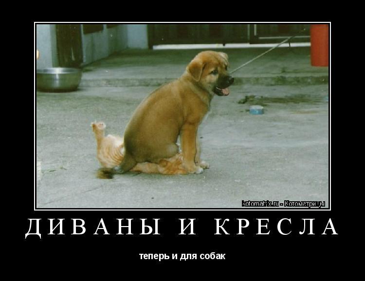 Котоматрица: Диваны и Кресла теперь и для собак