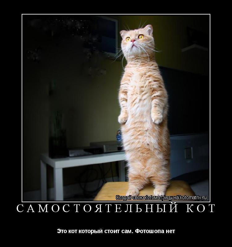 Котоматрица: Самостоятельный кот Это кот который стоит сам. Фотошопа нет
