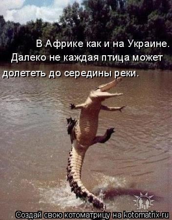 Котоматрица: В Африке как и на Украине. долететь до середины реки. Далеко не каждая птица может
