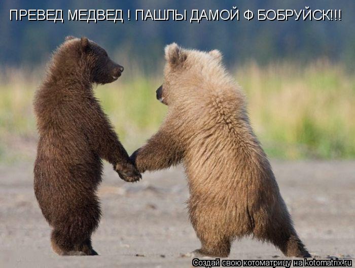 Котоматрица: ПРЕВЕД МЕДВЕД ! ПАШЛЫ ДАМОЙ Ф БОБРУЙСК!!!