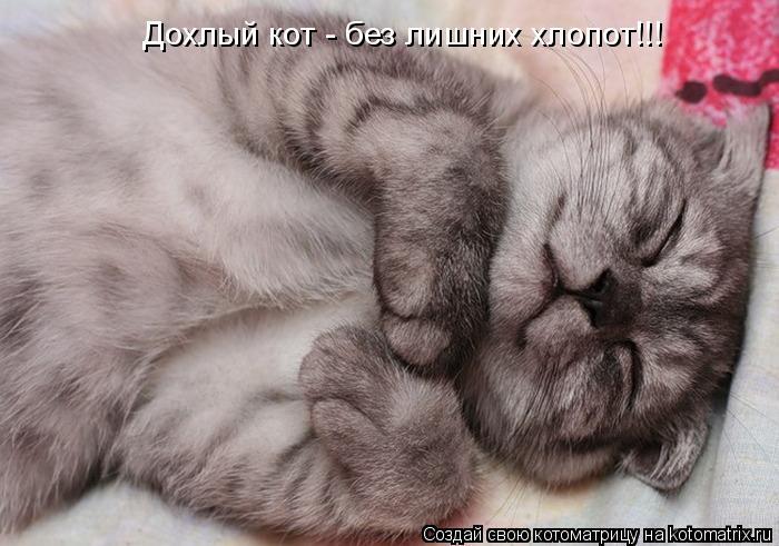 Котоматрица: Дохлый кот - без лишних хлопот!!!