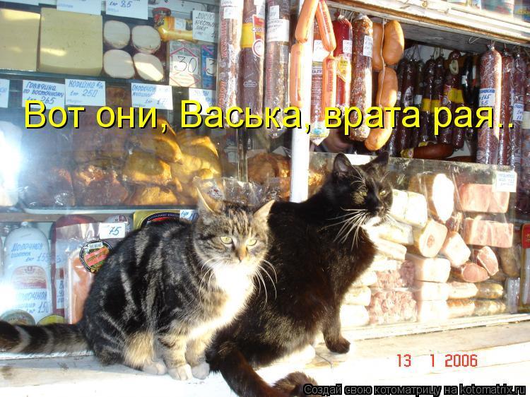 Котоматрица: Вот они, Васька, врата рая..