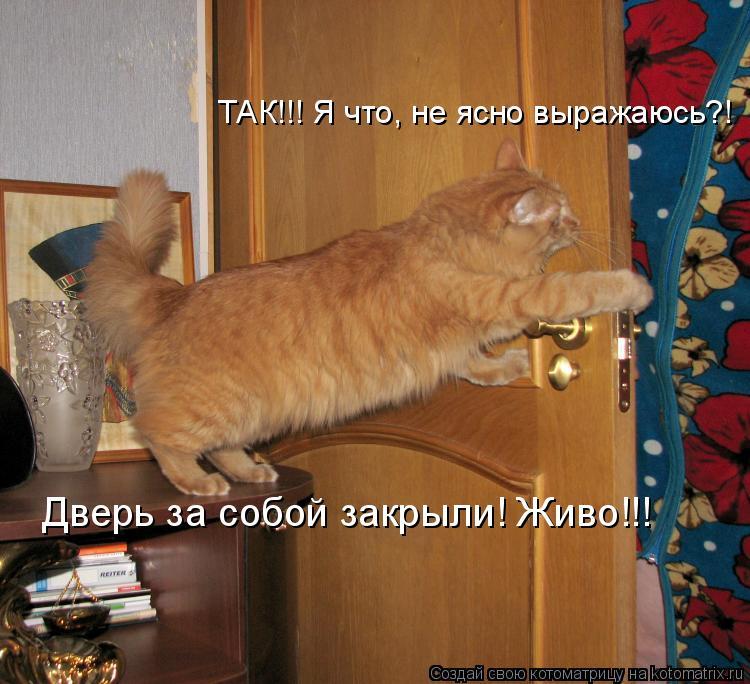 Котоматрица: ТАК!!! Я что, не ясно выражаюсь?! Дверь за собой закрыли! Живо!!!