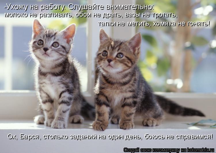 http://kotomatrix.ru/images/lolz/2010/02/12/485287.jpg