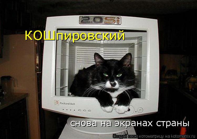 Котоматрица: снова на экранах страны КОШпировский