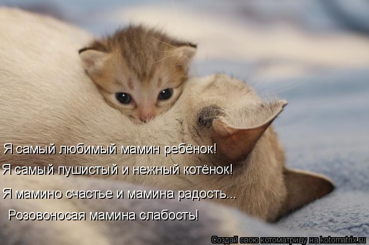Котоматрица: Я самый любимый мамин ребёнок! Я самый пушистый и нежный котёнок! Я мамино счастье и мамина радость... Розовоносая мамина слабость!