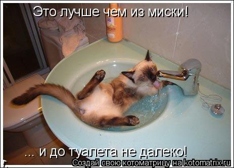 Котоматрица: Это лучше чем из миски!  ... и до туалета не далеко!