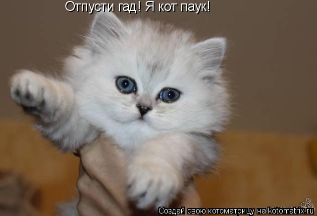 Котоматрица: Отпусти гад! Я кот паук!