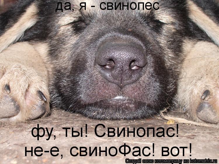 Котоматрица: да, я - свинопес фу, ты! Свинопас! не-е, свиноФас! вот!