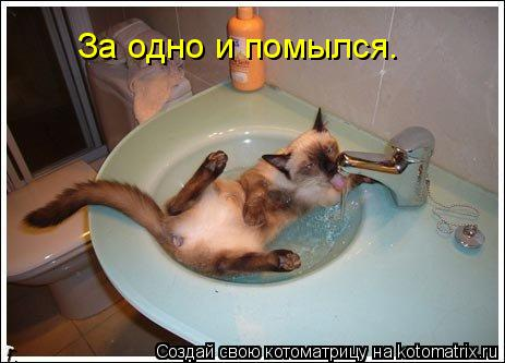 Котоматрица: За одно и помылся.