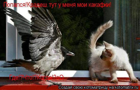 Котоматрица: Попался!Крадеш тут у меня мои какафки! Где!?Что!?Когда!?оО