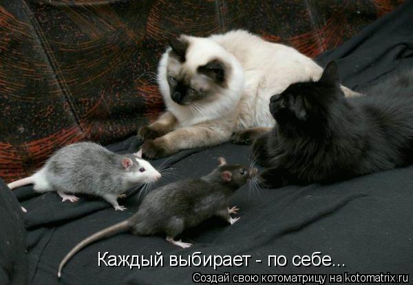 Котоматрица: Каждый выбирает - по себе...
