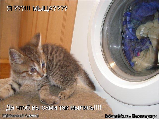 Котоматрица: Я ???!!! МЫЦА???? Да чтоб вы сами так мылись!!!!