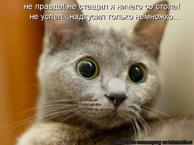 Котоматрица: не правда! не стащил я ничего со стола! не успел...надкусил только немножко...