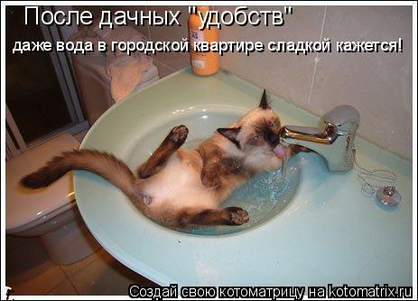 """Котоматрица: После дачных """"удобств"""" даже вода в городской квартире сладкой кажется!"""