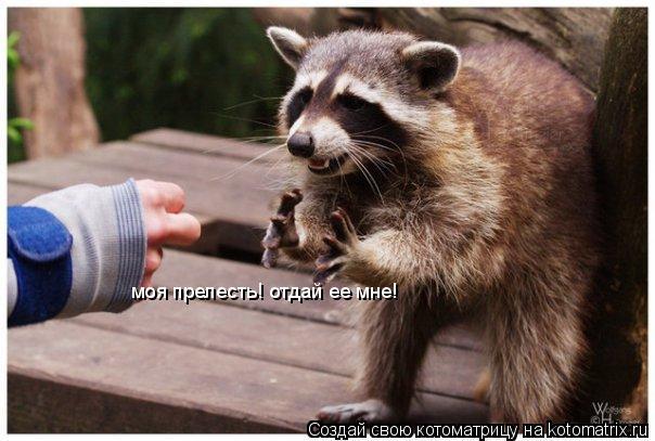 Котоматрица: моя прелесть! отдай ее мне!