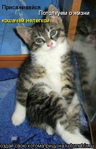 Котоматрица: Присаживайся кошачей нелегкой.. Потолкуем о жизни