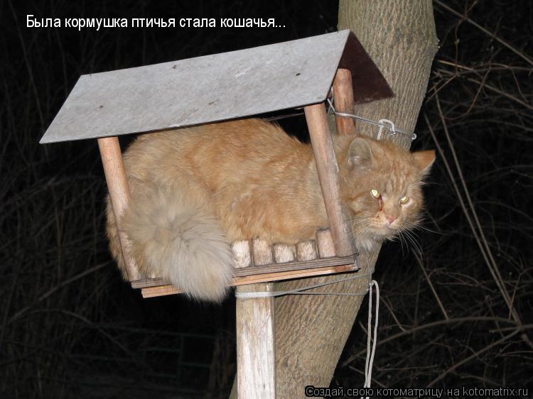 Котоматрица: Была кормушка птичья стала кошачья...