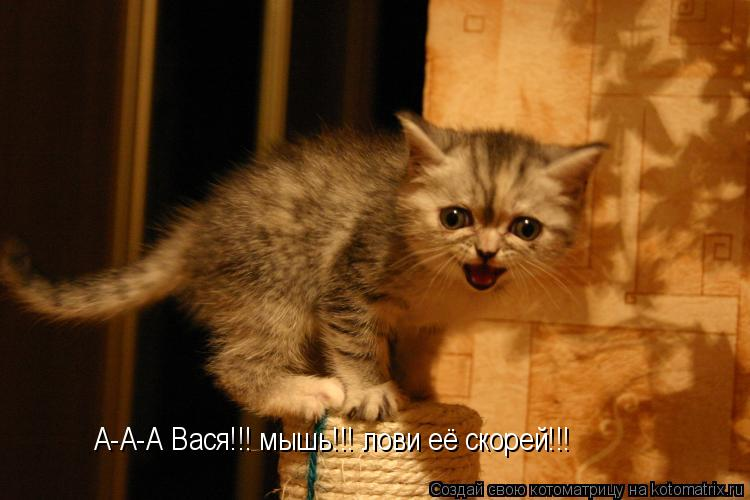 Котоматрица: А-А-А Вася!!! мышь!!! лови её скорей!!!