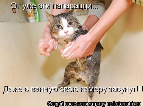 Котоматрица: От уже эти папарацци... Даже в ванную свою камеру засунут!!!