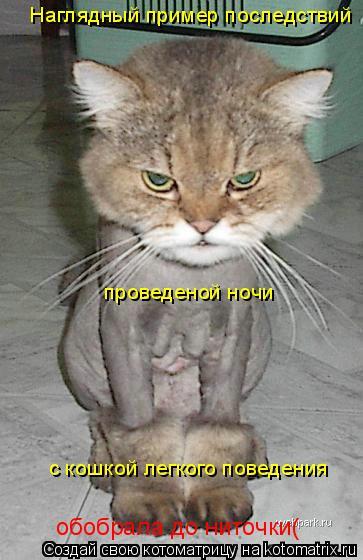 Котоматрица: Наглядный пример последствий проведеной ночи с кошкой легкого поведения обобрала до ниточки(