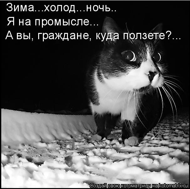 Котоматрица: Зима...холод...ночь.. Я на промысле... А вы, граждане, куда ползете?...