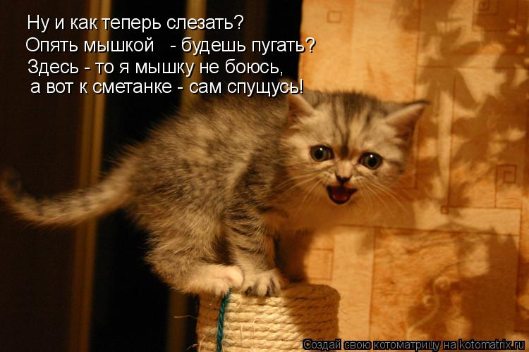 Котоматрица: Ну и как теперь слезать? Опять мышкой   - будешь пугать? Здесь - то я мышку не боюсь, а вот к сметанке - сам спущусь!