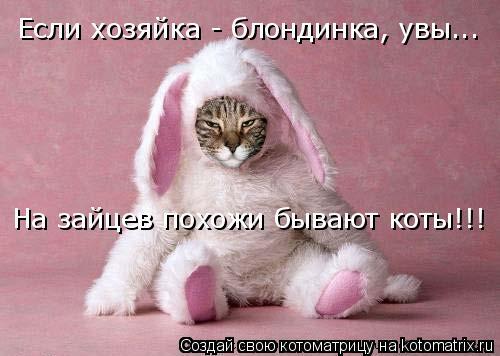 Котоматрица: Если хозяйка - блондинка, увы... На зайцев похожи бывают коты!!!