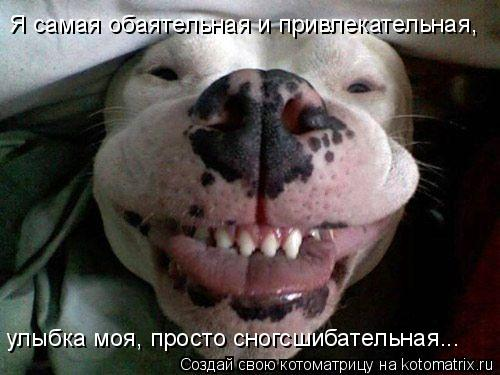 Котоматрица: Я самая обаятельная и привлекательная, улыбка моя, просто сногсшибательная...
