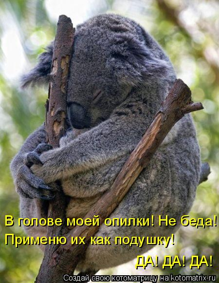 Котоматрица: В голове моей опилки! Не беда! Применю их как подушку!  ДА! ДА! ДА!