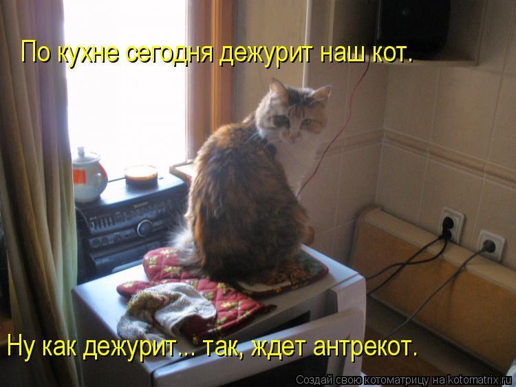 Котоматрица: По кухне сегодня дежурит наш кот.  Ну как дежурит... так, ждет антрекот.
