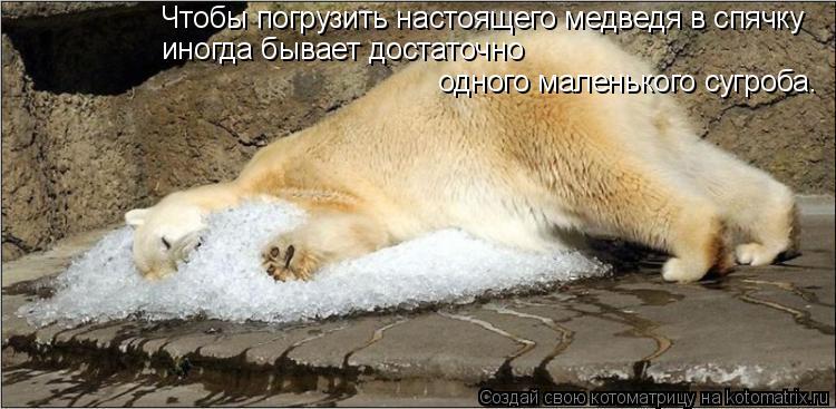 Котоматрица: Чтобы погрузить настоящего медведя в спячку иногда бывает достаточно одного маленького сугроба.