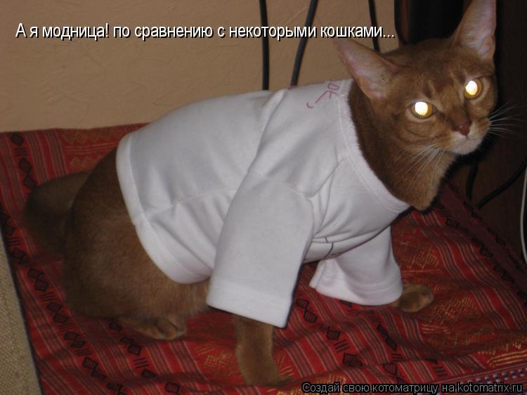 Котоматрица: А я модница! по сравнению с некоторыми кошками...