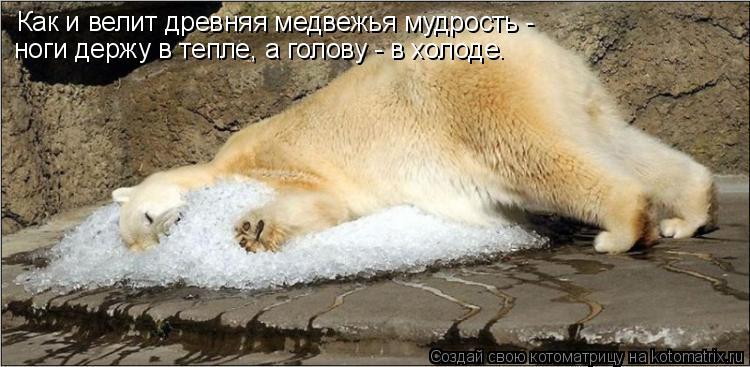 Котоматрица: Как и велит древняя медвежья мудрость - ноги держу в тепле, а голову - в холоде.