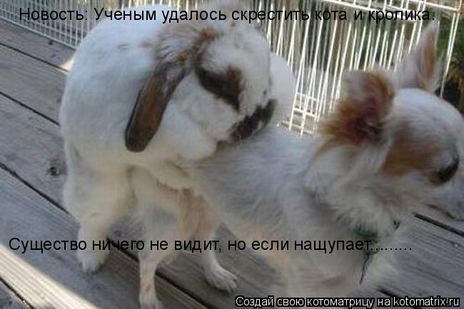 Котоматрица: Новость: Ученым удалось скрестить кота и кролика. Существо ничего не видит, но если нащупает.........