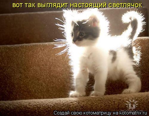 Котоматрица: вот так выглядит настоящий светлячок