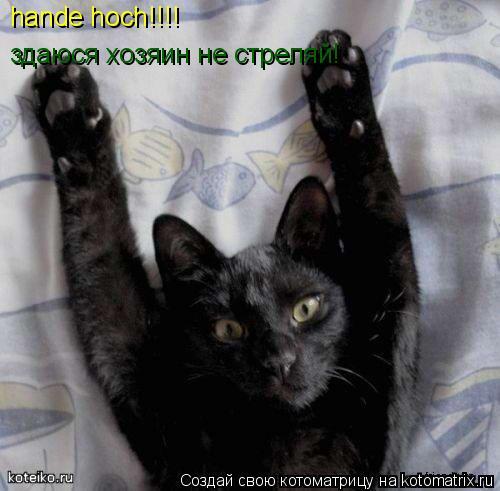 Котоматрица: hande hoch!!!! здаюся хозяин не стреляй!