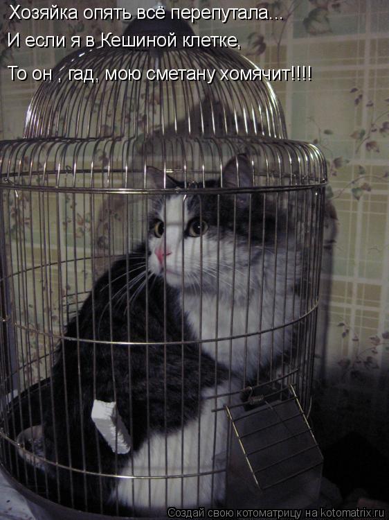 Котоматрица: Хозяйка опять всё перепутала... И если я в Кешиной клетке, То он , гад, мою сметану хомячит!!!!