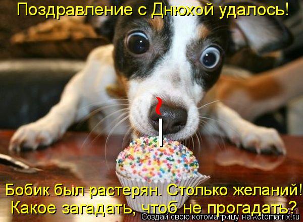 Котоматрица: Поздравление с Днюхой удалось!  _ ~ Бобик был растерян. Столько желаний!  Какое загадать, чтоб не прогадать?