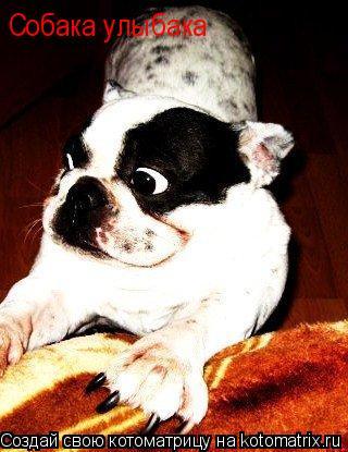 Котоматрица: Собака улыбака