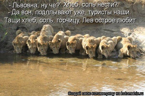 Котоматрица: - Львовна, ну че? - Да вон, подплывают уже, туристы наши. Хлеб, соль нести? Тащи хлеб, соль, горчицу. Лев острое любит