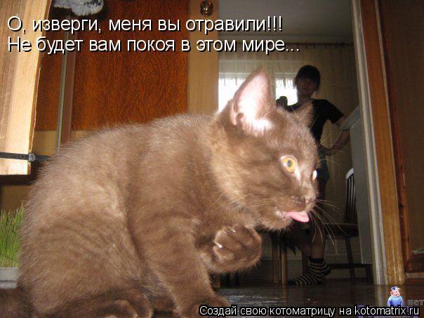 Котоматрица: О, изверги, меня вы отравили!!! Не будет вам покоя в этом мире...