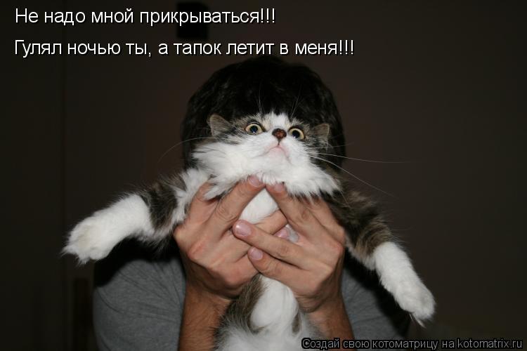 Котоматрица: Не надо мной прикрываться!!! Гулял ночью ты, а тапок летит в меня!!!