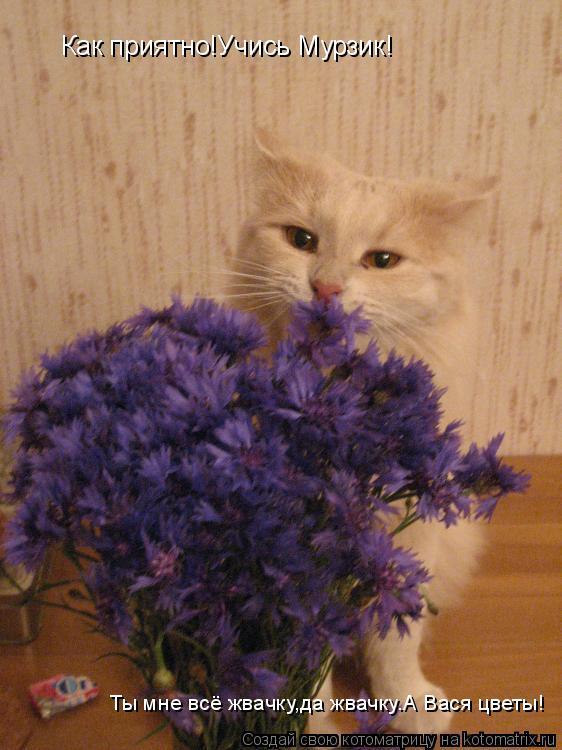 Котоматрица: Как приятно!Учись Мурзик! Ты мне всё жвачку,да жвачку.А Вася цветы!