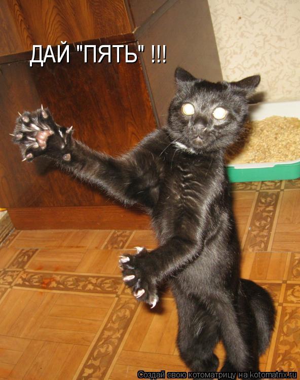 "Котоматрица: ДАЙ ""ПЯТЬ"" !!!"